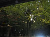 20061111_013_1