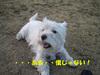 20070129_022_2