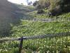 20070203_039jpg