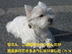 20070511_006_1