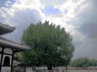 20070617_006