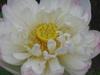 20070701_020jpg