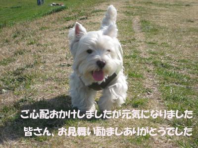 20080317_011_2