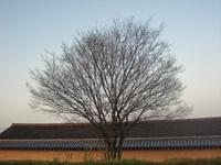 20090508_019
