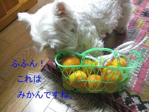 20091121_009