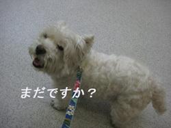 2010060711_019